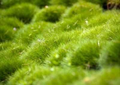 Ogrod wMiedzyleciu 14