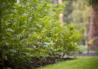 Ogrod wMiedzyleciu 17