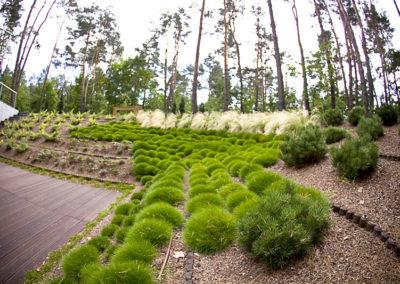 Ogrod wMiedzyleciu 7